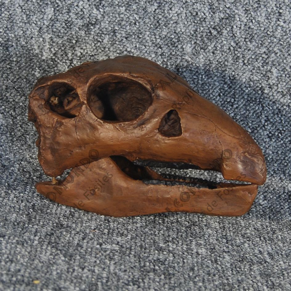 Thescelosaurus neglectus