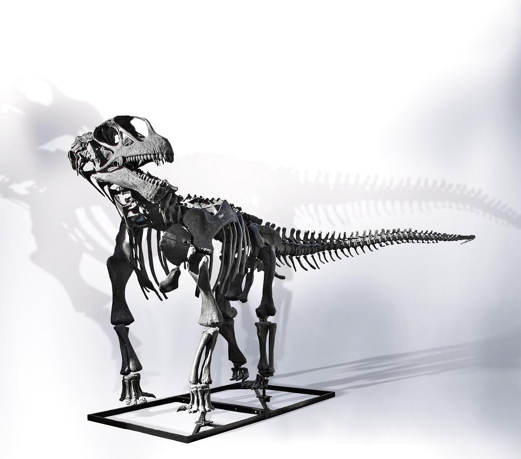 Camarasaurus grandis