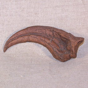 Oviraptor sp.