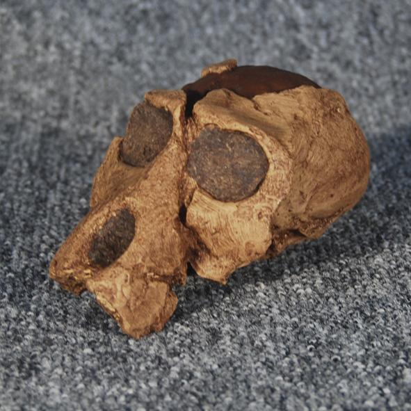 Parapapio antiquus