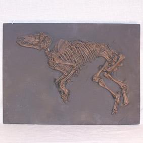 Propalaeotherium messelense