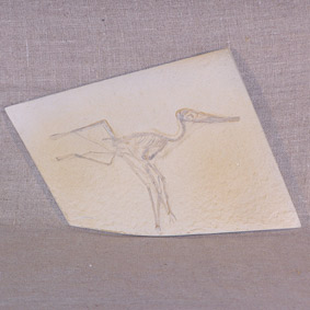 Pterodactylus elegans