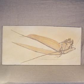 Rhamphorhynchus gemmingi