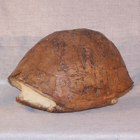 Testudo catalaunica irregularis
