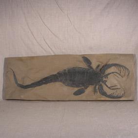 Mixopterus kiaeri