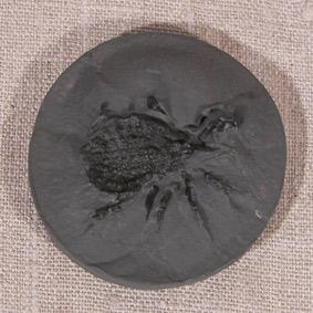 Eophrynus prestuici