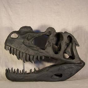 Ceratosaurus magnicornis