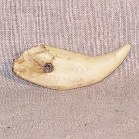 Colgante diente de oso