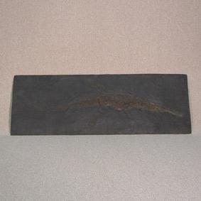 Steneosaurus bollensis