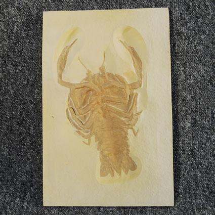 Cyclerion propinquus