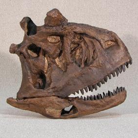 Carnotaurus sastrei