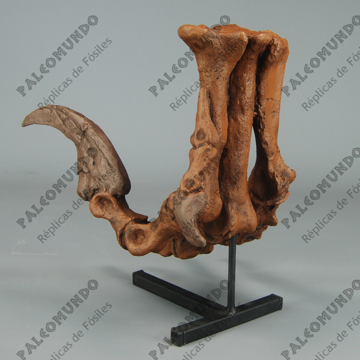 Utahraptor ostrommaysi