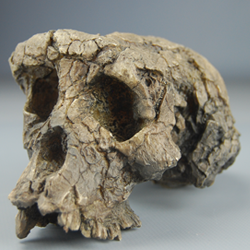 Paleoantropología