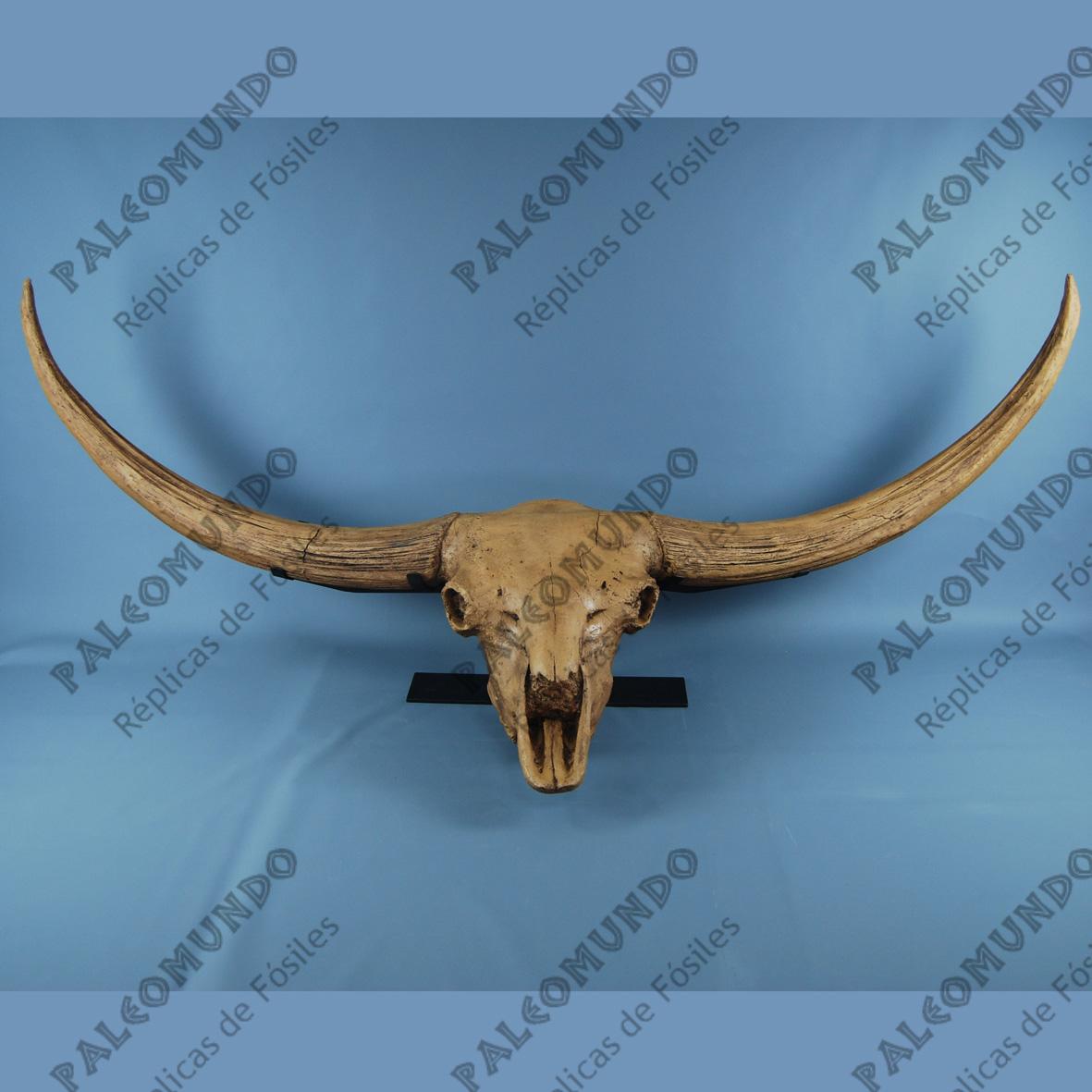 Bison latifrons