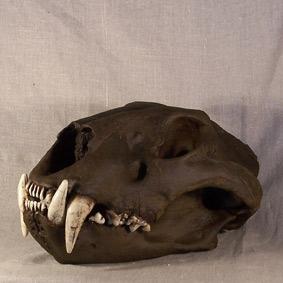 Panthera spelaea