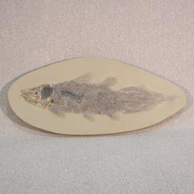 Axelrodichthys araripensis
