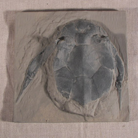 Bothriolepis canadensis