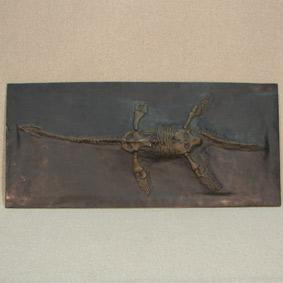 Plesiosaurus hawkinsi