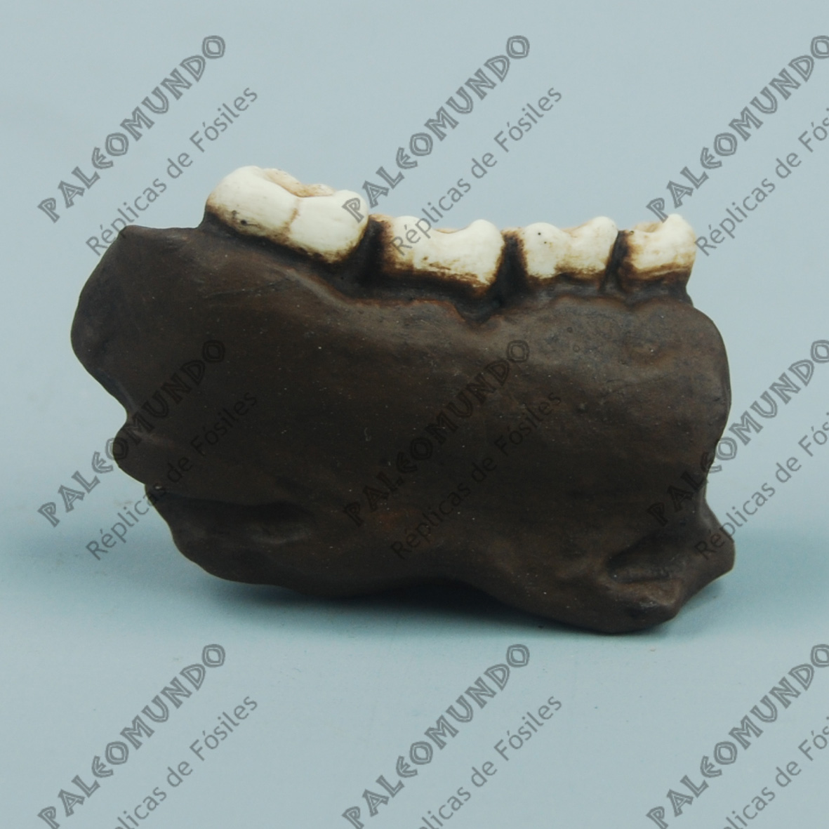 Dryopithecus frickae