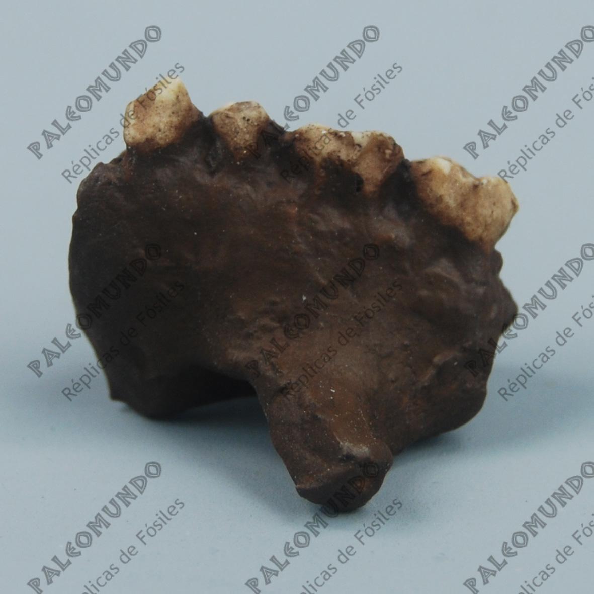 Ramapithecus punjabicus