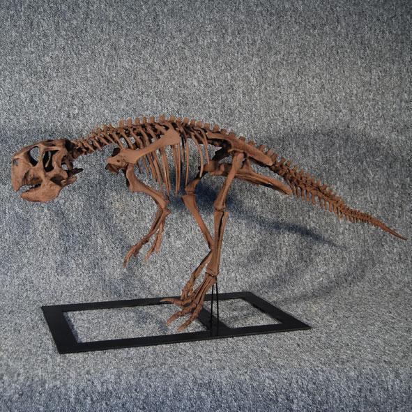 Psittacosaurus meileyingensis
