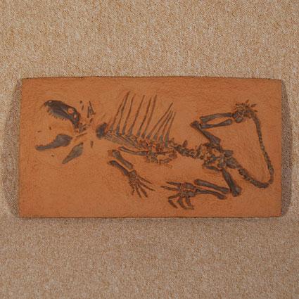 Dimetrodon juvenil