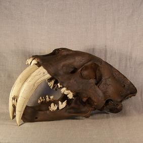 Smilodon fatalis